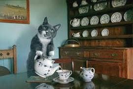 美味しいお茶を飲んだり