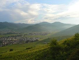vue sur KIntzheim et Ammerschwihr