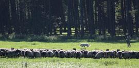 Momo mit mir an den Schafen, für'n Anfang sieht das doch gar nicht so schlecht aus ;-)