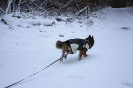 Mantrailing im Schnee