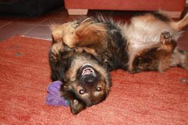 Entspannter, zufriedener Hund ... leider ist es nicht immer so