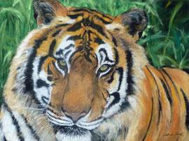 Tiger,Pastell,Raubkatzen