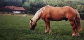 Goldie 1994