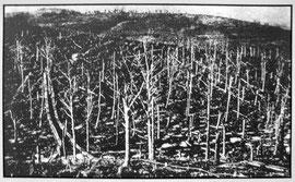zerstörter Wald, Verdun
