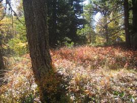 Herbstfarben im Val Fex