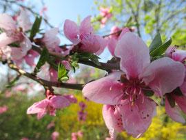 Pollenallergie mit der Körbler-Methode behandeln!