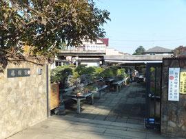 Tojuen Bonsai Garden