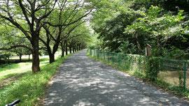 Minuma Watercourse East Edge