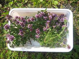 Lavendel-Oregano-Salbei-Minze