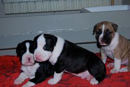 I tre delinquenti all'età di tre settimane