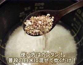 もち麦/ダイシモチ