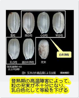 玄米の外観品質による分類
