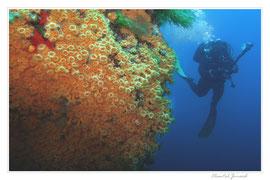 Carte postale, paysage méditerranée, anémone encroutante jaune