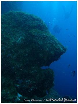 paysage sous marin, calanque sombre, gabiniere