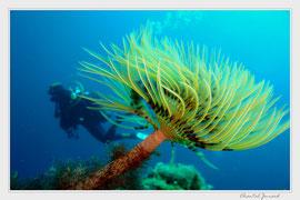 spirographe, carte postale pour plongeur