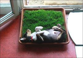 Tesla lernt....Gras ist zum pinkeln da. :-)