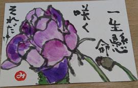 14 薔薇
