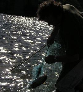 Mainfischer