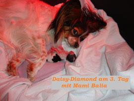 Balia mit Daisy-Diamond