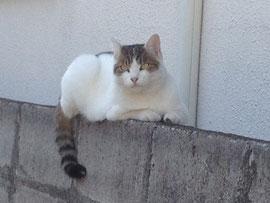 ライブ写真の代わりに世田谷の駐車場で会った美しい猫を。。。
