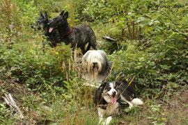 Aika, Darcy, Filou &Susi