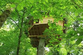 Perché dans un hêtre centenaire, la cabane écureuil