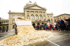 Goldregen in Bern; Foto: S. Bohrer