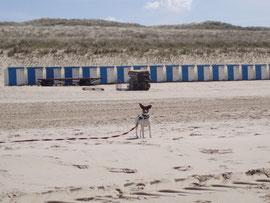 Strand ist toll