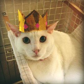 王子さまやね〜♡きんぐ〜