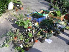 Bourses aux plantes 2013 association des amis du jardin for Amis du jardin botanique