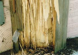 シロアリにやられた柱の根本  こうなったらちょっと厄介です。その前に防虫処理をしたいところです
