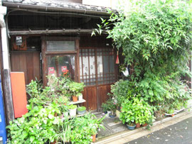 植木鉢をいっぱい飾った下町の長屋