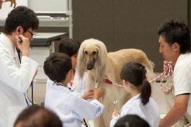 犬を診察してその生態を学ぶ「どうぶつのお医者さん体験!」