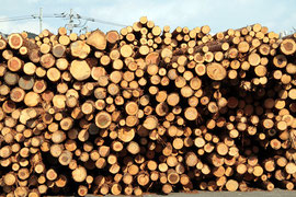 太さが不揃いで曲がっている間伐材の用途は限られている