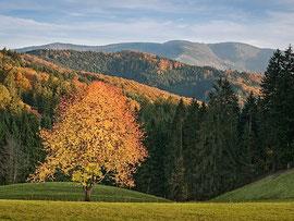 フライアムト村があるバーデン=ヴュルテンベルク州の豊かな森 Photo by andywon