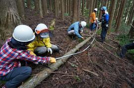 倒した木は、運び出しやすいよう適当な長さに切る「玉切り」や、余分や枝や節をノコギリで切り落とす「枝払い」などの作業も行う