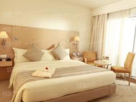 Room Golden Tulip