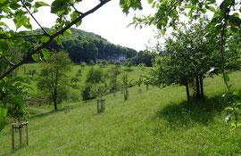 Obstwiese an der Löwenburg im Siebengebirge (Foto: Biologische Station)