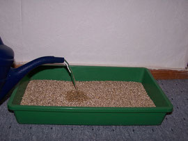 10. Pouring in water - Moisten the vermiculite with a watering can - iriszucht.de