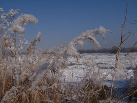 14. Kältebehandlung - 4-5 Wochen bei 4°C regen die Keimung an - iriszucht.de