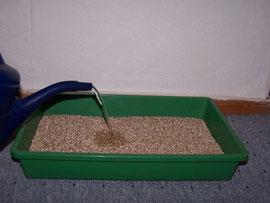 10. Wasser aufgießen - Befeuchten des Vermiculits mit Hilfe einer Gießkanne - iriszucht.de