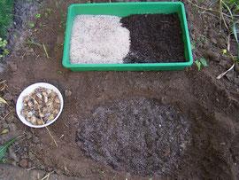 8. Boden vorbereiten - Amelioration der Erde für Zwergschwertlilien mit Sand und Kompost - iriszucht.de