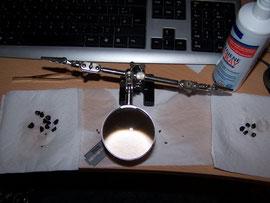12. Sammeln - Linkerhand unangeschnittene Samen, in der Mitte Anschnitt, rechterhand angeschnittene Samen - iriszucht.de
