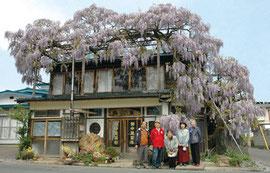 清遠短歌会の吟行で見事なフジを見学する(2008年5月)