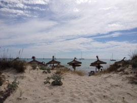 Traumstrand Es Trend auf Mallorca