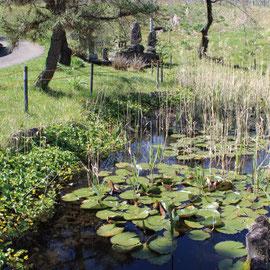 三嶽神社隣接姥ヶ池