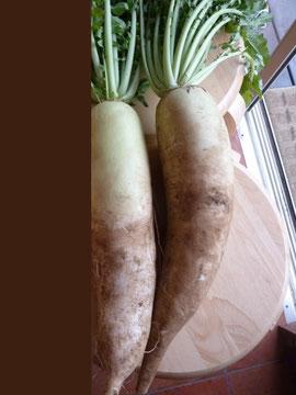 窒素肥料を加えた大根は、外見、、形、大きさが整う。映像左。