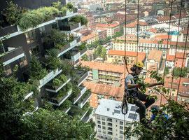 Il bosco verticale - Milan 2014