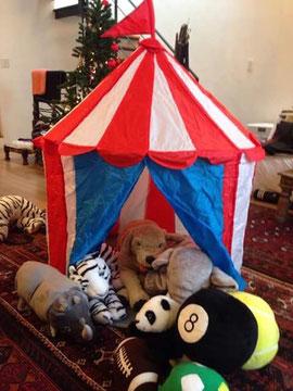 世田谷のシモヘイおじさんから(募金とは別に)児童養護施設の幼児さんにテントと動物のぬいぐるみをプレゼント。子どもたちも大喜びと園長先生からお電話が。