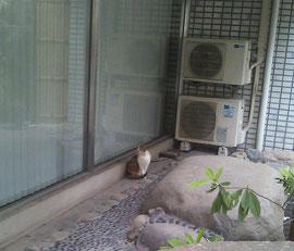 K YOGAスタジオのそばにいた猫